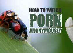 Is Your Favorite Site Blocked? How to Watch Porn with a VPN